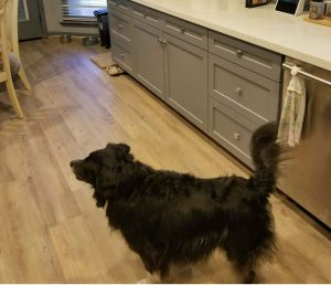 Clear Lake Texas Best Flooring For Dogs