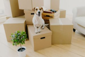League City Texas Pet Friendly Flooring