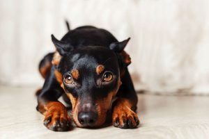 Kingwood Texas Best Flooring For Dogs